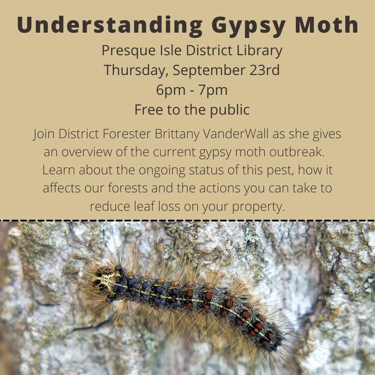 Understanding Gypsy Moth (1).jpg